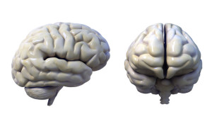 brain3d