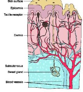 Торакоскопическая симпатэктомия в больнице Шнайдер